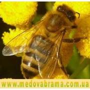 препараты для лечения пчел