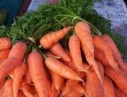 Куплю морковь оптом