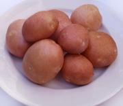 Куплю оптом картофель сортов Славянка,  Беллароза