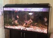 Аквариум на 360 л. с рыбками