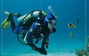 Подводная экскурсия в Голубой бухте Севастополя