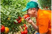 Крупная компания приглашает на работу агронома.